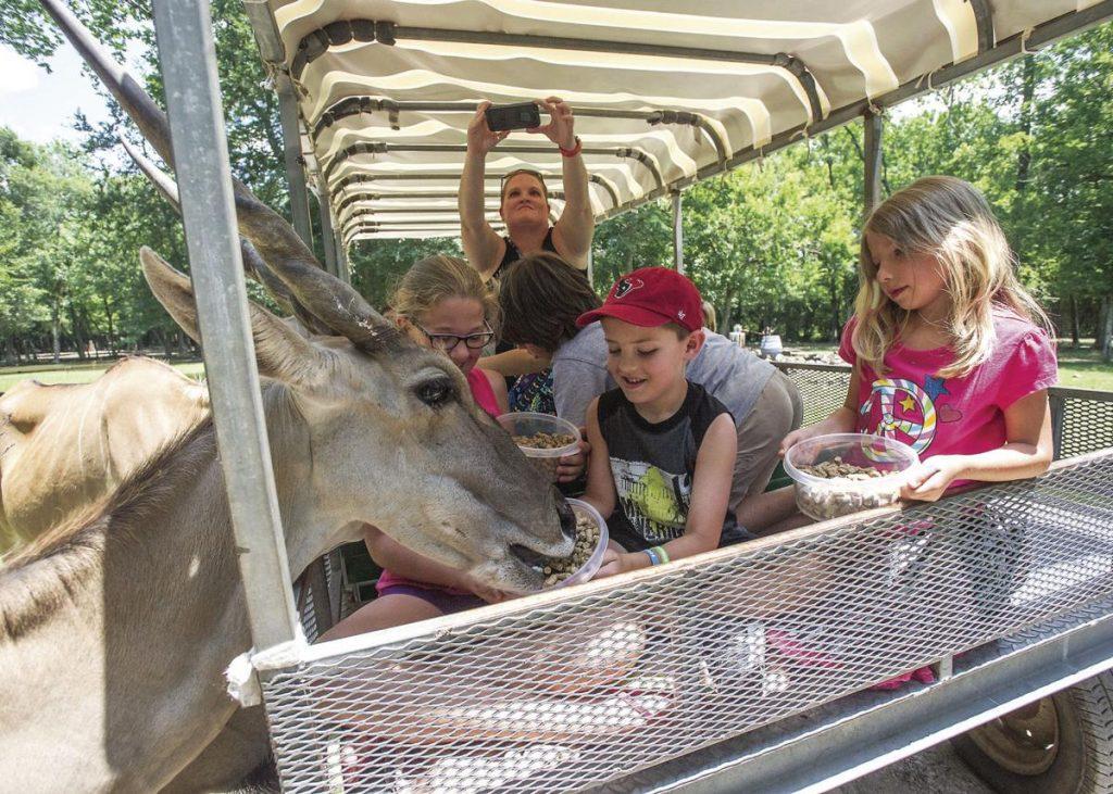 zoo in alwin texas