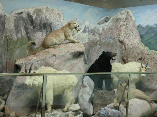 El Campo Museum of Natural History
